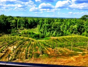 The breathtaking view from Saude Creek Winery