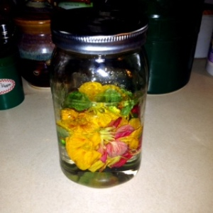 Nasturtium soaking in Vodka