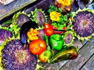 Late Summer Harvest poses for one last picture