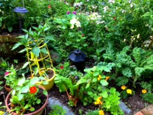 Peppers, Nasturtium and Kale Dance among the Flowers