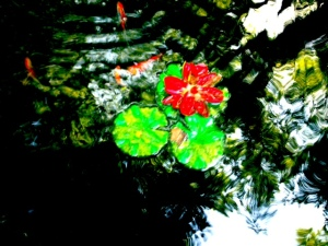 My Koi hidden in the reflection