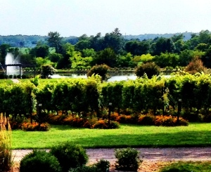 The ever-friendly and truly unique Old House Vineyard near Culpeper