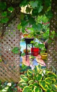 A peek into a Secret Garden