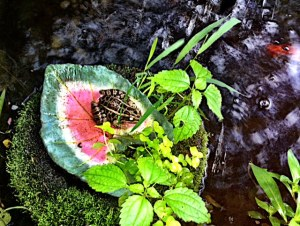 Real frog sits on a fake lily pad in the pond!